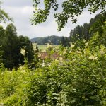 Donau-Regen-Radweg bei Konzell
