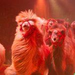 zirkus-charles-knie_gastvorstellung-in-essen_premiere_marek-jama_wildtierdressur