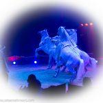 zirkus-charles-knie_gastvorstellung-in-essen_premiere_marek-jama_pferdedressur