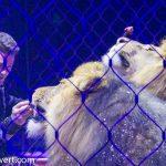 zirkus-charles-knie_gastvorstellung-in-essen_premiere_alexander-lacey-Raubtierdressur