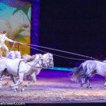cavalluna_welt-der-fantasie_Ungarische Post von Laury Tisseur