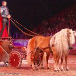 cavalluna_welt-der-fantasie_Claus Luber mit seinem Haflinger-Gespann