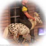 Tierdressur-Show »Dogs und Horses« - Comedy-Akrobat Andrei Bocancea mit Mini-Pferdchen »Bacardi«