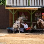 Rosi's »Dogs & Horses«-elspe-festival-der-oelprinz-karl-may-festspiele-2021
