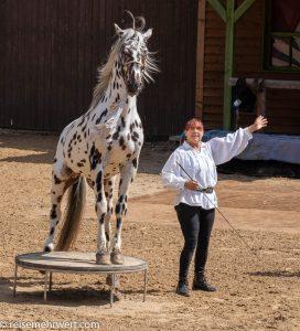 Tiertrainerin Rosi Hochegger mit »Cyrano«-elspe-festival-der-oelprinz-karl-may-festspiele-2021